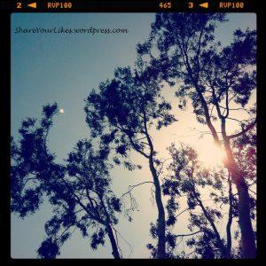 Ο ήλιος παίζει κρυφτό με ένα δέντρο